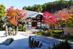 Enko-ji, Honryu-tei (Garden) -1 (November 2014)