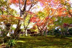 Enko-ji, Jugyu-no-niwa (Garden) -1 (November 2014)