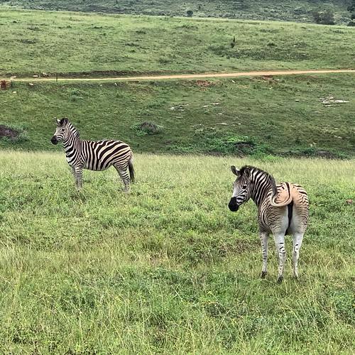 Zuid Afrika19