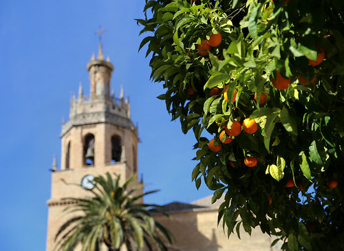 Under the orange trees in Andalusia