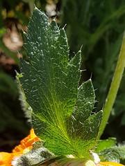 L'As de pique vert - Photo of Épiais-Rhus