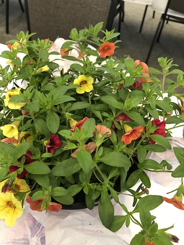 Red, Yellow and Orange plant