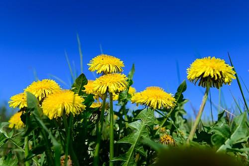 Sunny spring ☀️🌼