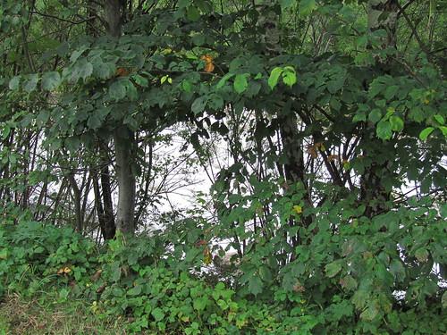 20110908 23 301 Jakobus Bach Bäume
