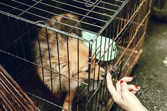 Cute little dog in the cage. Tropical island of Bali, Indonesia.