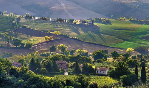 *Montepulciano Countryside*