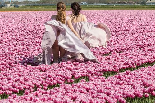 Pink Tulips - Ladies in Pink - in Explore -