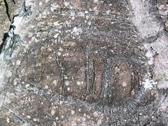 Peridotite & serpentinite (Upper Komatiitic Unit, Kidd-Munro Assemblage, Neoarchean, 2.711-2.717 Ga; southwest of the Potter Mine, east of Timmins, Ontario, Canada) 3