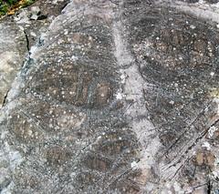 Peridotite & serpentinite (Upper Komatiitic Unit, Kidd-Munro Assemblage, Neoarchean, 2.711-2.717 Ga; southwest of the Potter Mine, east of Timmins, Ontario, Canada) 2