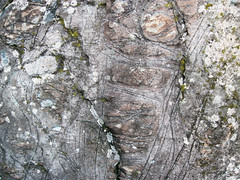 Peridotite & serpentinite (Upper Komatiitic Unit, Kidd-Munro Assemblage, Neoarchean, 2.711-2.717 Ga; southwest of the Potter Mine, east of Timmins, Ontario, Canada) 11
