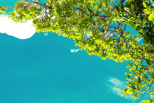 Photo:Blue bright tropical sky background. Sunny day. Bali island, Indonesia. By Artem Beliaikin