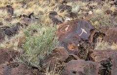 Hummingbird Petroglyph