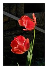 Fleurs... - Photo of Marmeaux