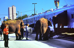 Elephant Emerging from RBBX Railcar