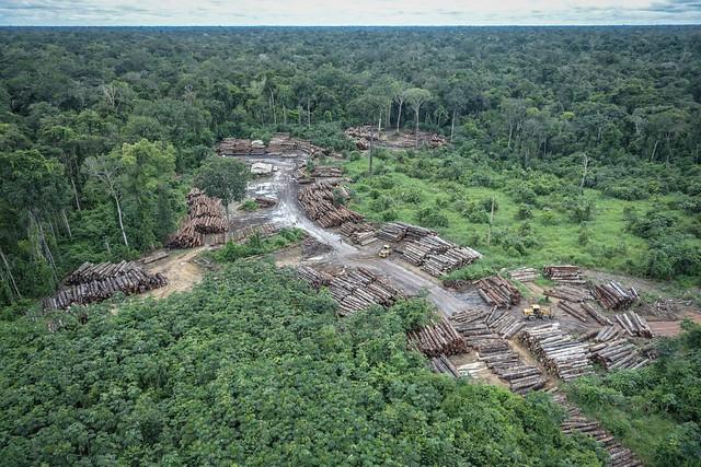 Cerca de 12 milhões de hectares de florestas tropicais desapareceram em 2018 - Créditos: Felipe Werneck/ibama