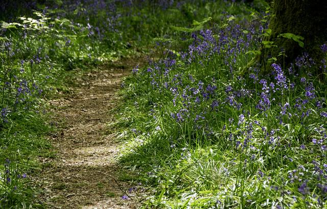 20190507-DSC_0959 Micheldever Woods Hampshire