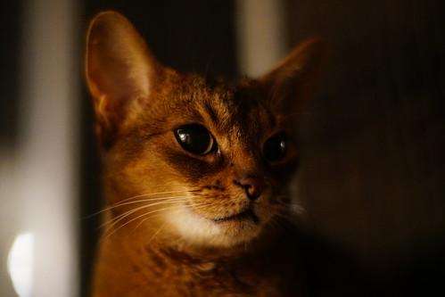LizZie in the dark