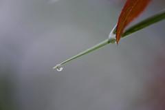 Après la pluie - Photo of Montvalent