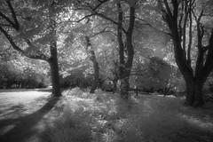 Park in Infrared