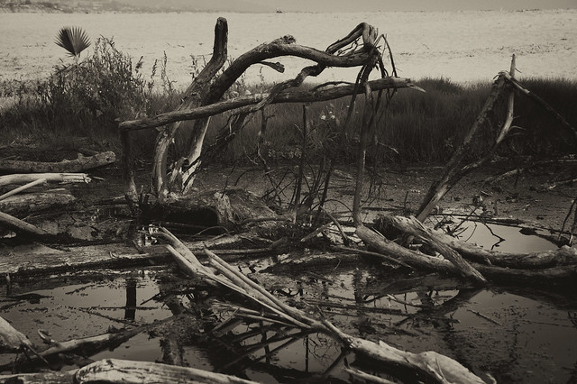 beach swamp