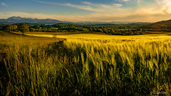 Wheatfield - Photo of Saint-Quentin-la-Tour
