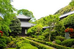 Anraku-ji, Hondo (Main Hall) -1 (May 2019)