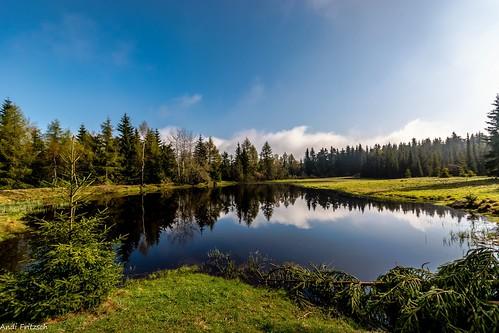 Der kleine Teich im Wald