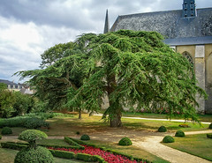 Tree on the château  grounds