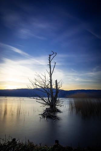 L'arbre de Cheyres