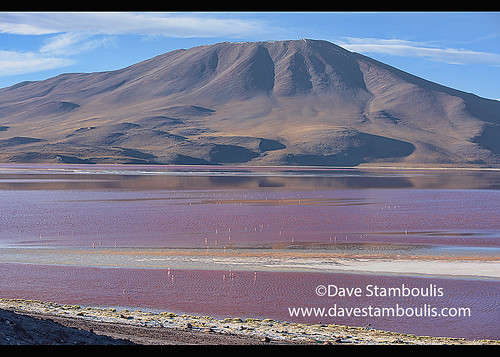 A flamboyance of James's, Andean, and Chilean flamingos on Laguna Colorada, Salar de Uyuni, Bolivia