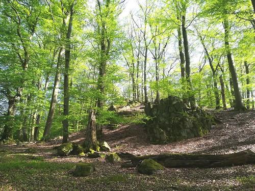 Wald bei Niedersayn mit Vulkangestein