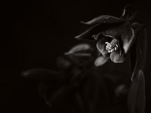 Plants in B/W