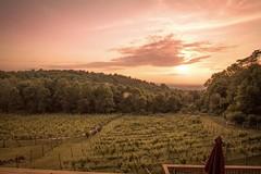 Twin Oaks Tavern Winery of Northern Virginia