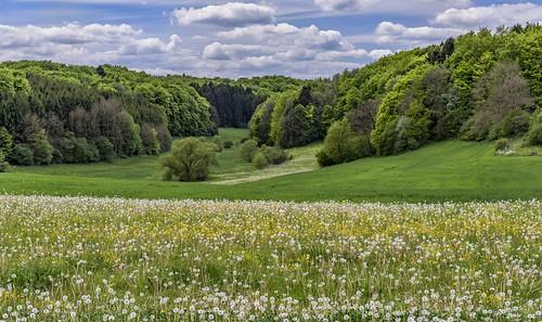 *Frühling in der Schönecker Schweiz*