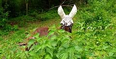 Quel est cet étrange Animal dans les feuillages??!!