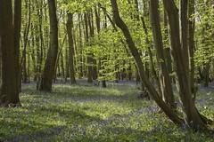 Promenons-nous dans les bois ... *