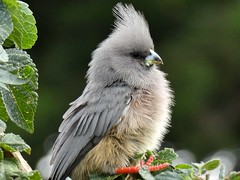 Oiseaux en Namibie