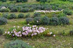 Jardins du MIP