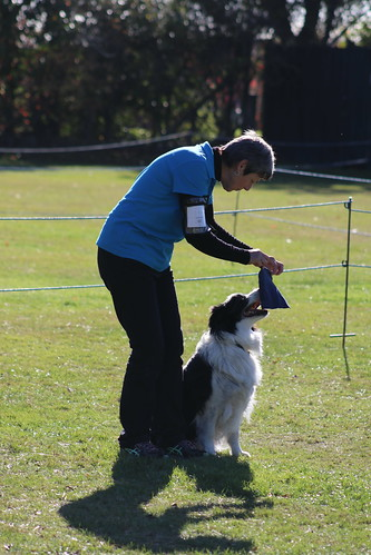 South Canterbury Dog Training Club