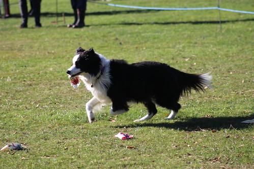 South Canterbury Dog Training Club