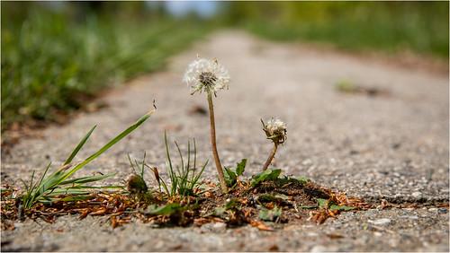 Flower Power . Springtime