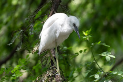 White Bird in Green Tree