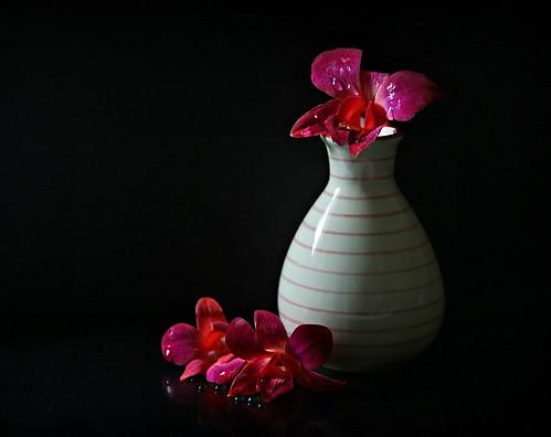 Orchid still life in low key