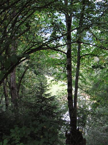 20110914 29 074 Jakobus Inn Fluß Wald Bäume