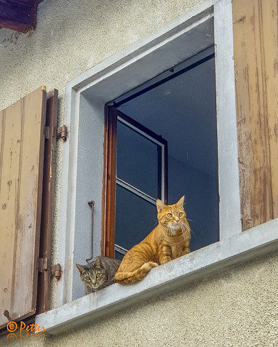 Cat at the window