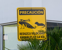 Caution Sign - Iguanas and Peacocks - Colombia