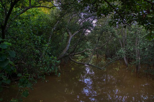 Berlayer Creek with mangrove thicket in Singapore