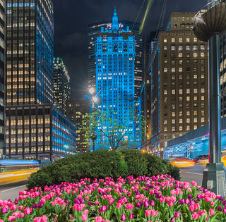 Helmsley Building and tulips on Park Avenue