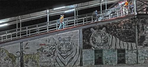 Tiger Train Station DSC_3805