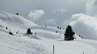Am Sellajoch; Südtirol, Italien (76a)